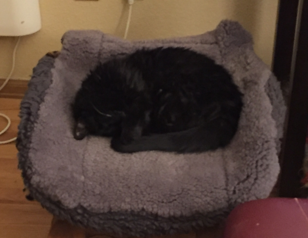 This is my little bed in the sitting room. Mom made it for Jules, but I Lucy use it all the time.