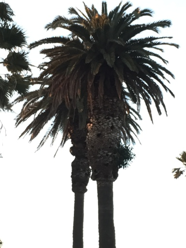 one of the inhabited palms in the late afternoon
