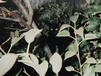 little lucy--tree