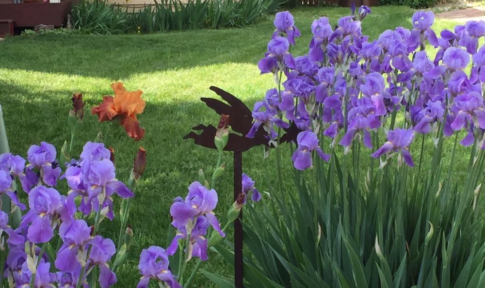 iris and fairy