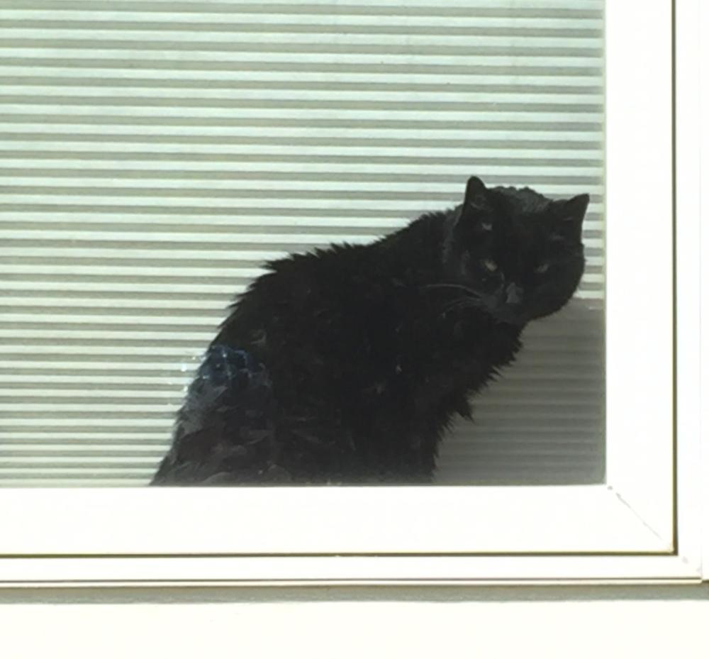 lucy-front-window-e1530115241925.jpg