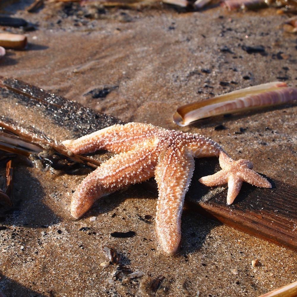 starfish-713049_1280